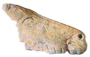 Contorno recortado de La Viña. © Javier Fortea. Museo Arqueológico de Asturias