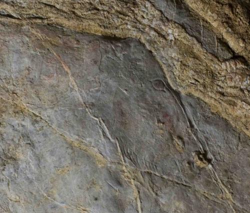 Caballo grabado en el panel principal. Detalle de la cabeza. © Sergio Ríos. Principado de Asturias, Consejería de Cultura