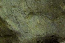 Cierva. © Sergio Ríos. Principado de Asturias, Consejería de Cultura