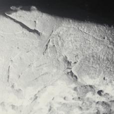 Caballos grabados (1917). © Francisco Hernández-Pacheco de la Cuesta. Museo Nacional de Ciencias Naturales