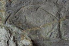 Bisonte del friso superior. © Sergio Ríos. Principado de Asturias, Consejería de Cultura