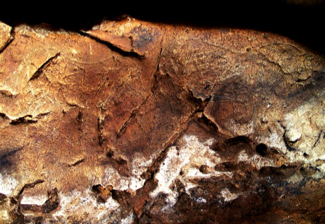 Caballos grabados. © Texnai. Principado de Asturias, Consejería de Cultura