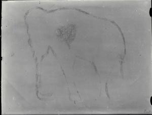 Calco de Benítez Mellado del mamut de El Pindal. © Francisco Hernández-Pacheco. CSIC
