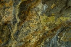 Ciervas grabadas en la Gran Hornacina de La Lluera. © Sergio Ríos, Principado de Asturias, Consejería de Cultura