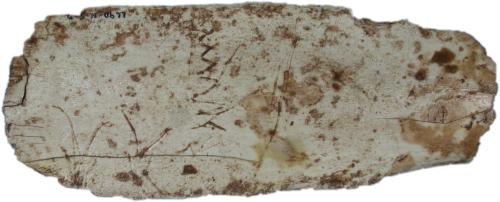 Costilla grabada con representaciones de cabras en visión frontal, procedente de los niveles magdalenienses de Llonín. © Museo Arqueológico de Asturias