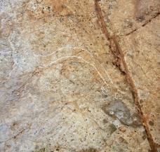 Cabeza de cabra grabada en el conjunto E de la cueva de Coímbre. © Equipo Norte, Ministerio de Educación y Cultura
