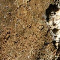 Cabeza de cierva en perfil izquierdo, grabada en el conjunto E de Coímbre. © Equipo Norte, Ministerio de Educación y Cultura.