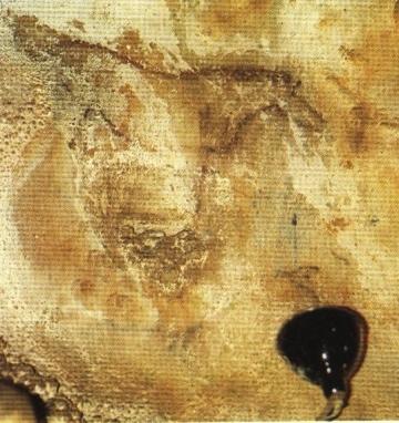 Caballo del Talud de La Peña de Candamo © Javier Rodríguez Muñoz, Silverio Cañada Editores