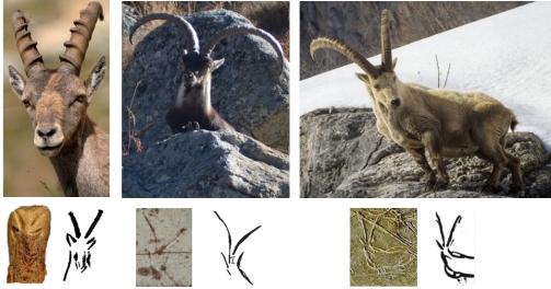 Comparativa de actitudes naturalistas de cabras en alerta con ejemplos de decoración en perspectiva frontal. De izquierda a derecha: El Pendo, Llonín y Abauntz