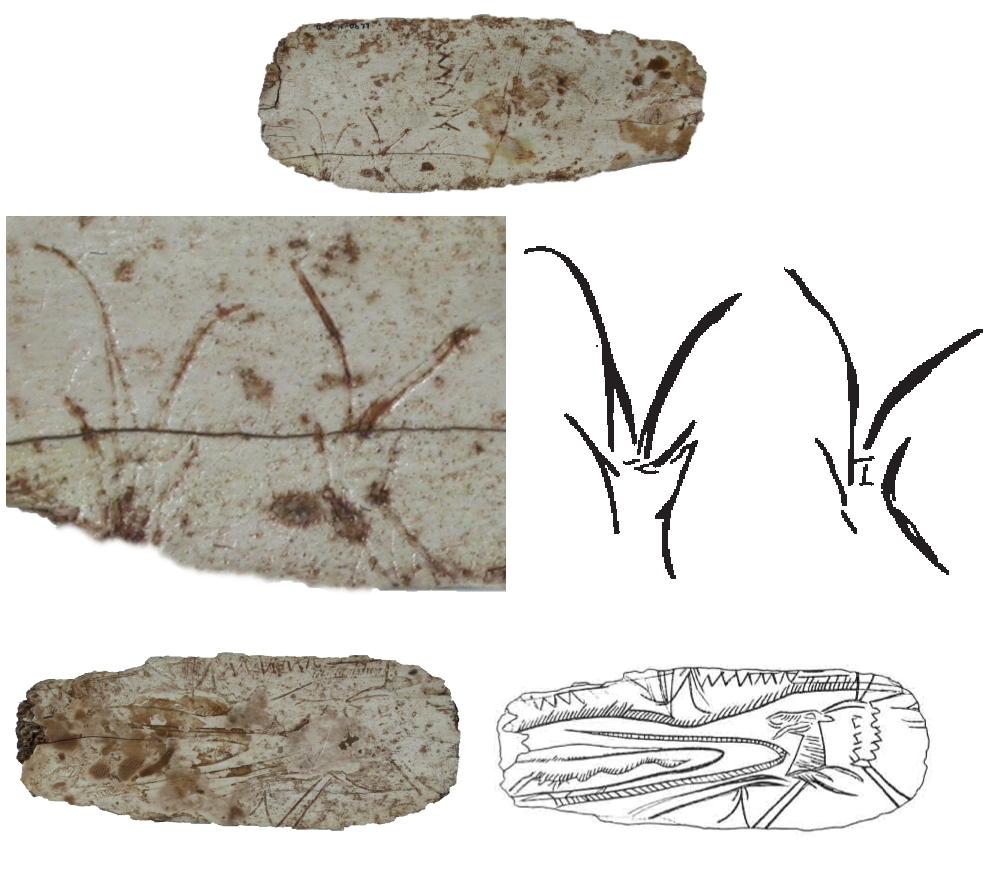 Costilla de Llonín con estilizaciones de cabra en perspectiva frontal. De arriba a abajo, y de izquierda a derecha: a derecha, anverso, detalle y calco; reverso y calco © Javier Fortea, Museo Arqueológico de Asturias