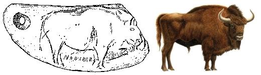 Calco y dibujo comparativo de la representación del bisonte en el anverso del colgante. © Soledad Corchón, Diego Álvarez Lao