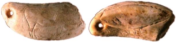 Anverso y reverso del colgante sobre diente de cachalote de la cueva procedente de la cueva de Las Caldas. © Soledad Corchón, Museo Arqueológico de Asturias