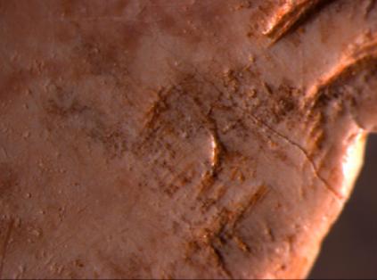 Detalle al microscopio del ojo del bisonte representado. © Olivia Rivero