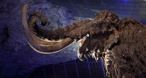 Réplica de mamut en el Centro de Interpretación de la Fauna Glacial © Centro de Interpretación de la Fauna Glacial