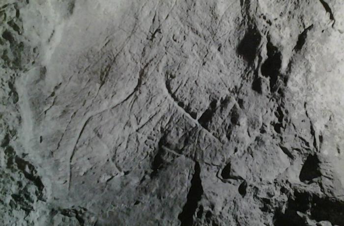 Caballo grabado orientado a la derecha © Manuel Mallo Viesca